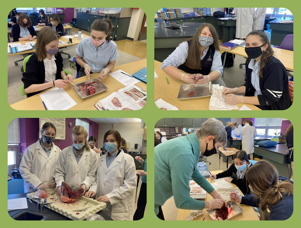 Dr. Way and her anatomy class @ DCC dissected hearts recently. The aim of this project was to learn the inner workings of the heart.  Students enjoy this challenging class with many hands on labs.