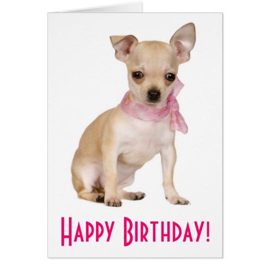 happy_birthday_chihuahua_puppy_dog_greeting_card-raff7adeb9954499a8e9a4cb162a63cee_xvuai_8byvr_540.jpg
